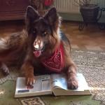 Prawa i obowiązki właścicieli psów - przepisy prawne