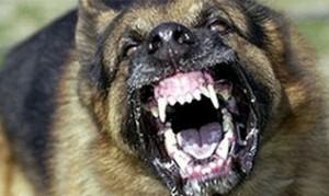 wsciekly-pies