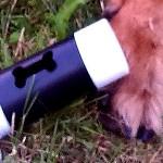 Akcja – badamy psie… kupki