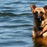 Z psem na plażę? Nad morze? Gdańsk zaprasza!