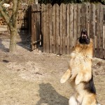Dzień psa – 30 ciekawostek o Donnerze.