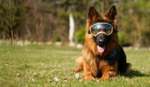 Okulary dla psa - Goggle Rex Specs K9 [test]