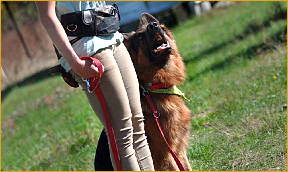 Szkolenie i wychowanie psów