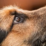 Jak odměnit psa? – seminarium z pozytywnych metod szkoleniowych z Nikola Koubková.