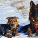 Historia o psie wiatrem czesanym.