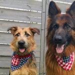 Chustka – bandanka dla psa DIY