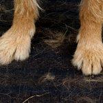 Wszechobecne psie futro przestało być problemem!
