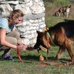 Pozytywne szkolenie psów dla żółtodziobów [recenzja książki]