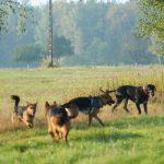 Foto-Canid 'Pies w Kadrze'