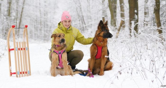 Sanki z psem – dla kogo?