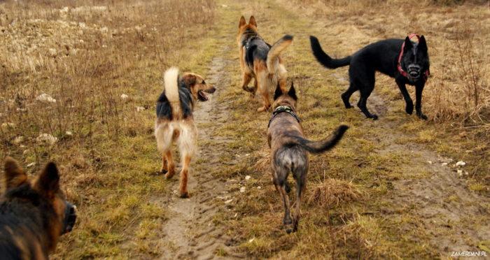 Kurs komunikacji i interakcji społecznych psów w CANID