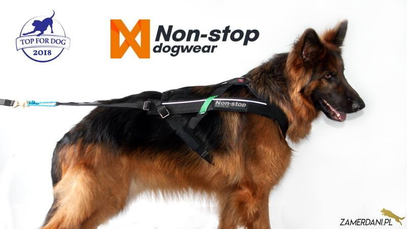 Na białym tle stoi mięknie prezentujący się pies, owczarek niemiecki. O rudnym spodzie i czarną błyszczącą derką. Ma na sobie szelki do biegania firmy Non-Stop Dog Wear. W na górze zdjęcia znajduje się logo Top For Dog i Non-Stop Dogwear.