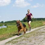 Komplet do biegania z psem – Non-Stop Dogwear