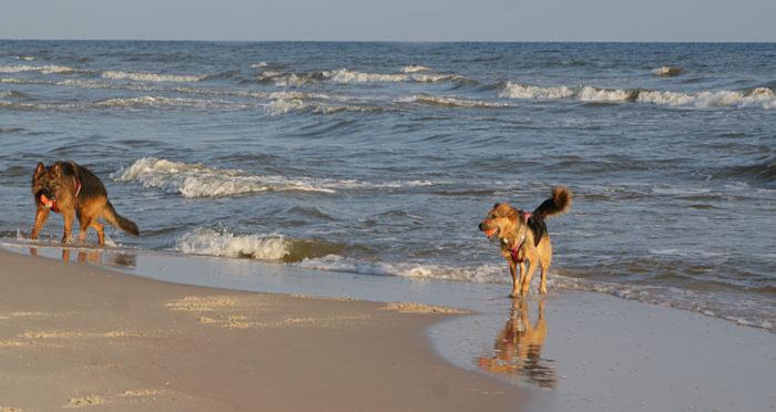 Od Soliny po Bałtyk – wakacje z przygodami