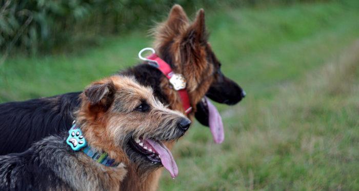 Lokalizator dla psa – Calmean Pet Tracker