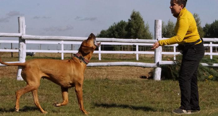 Pies – emocje, motywacja i społeczne uczenie się oraz Do As I Do
