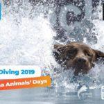 Wyjątkowo krótka przygoda z Dog Diving