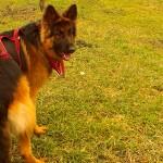 Domowe sposoby na psi sprzęt do biegania.