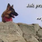 Pies w Bieszczadach