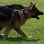 Wścieklizna, szczepienie, zaginiony pies – rozwiązanie DogID!
