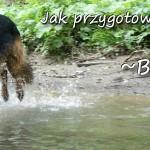 Pies w Beskidach