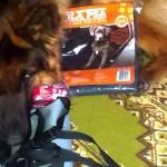 Biedronkowe psie zakupy – okazja czy szajs?