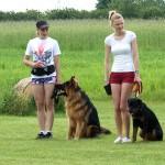 Szkolenie psa – moda, rozsądek czy snobizm