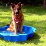 Pies na basenie