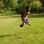 Ufo i latające talerze – test ogólnodostępnych frisbee od laików dla każdego