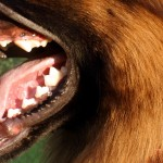 Zadbaj o psi uśmiech