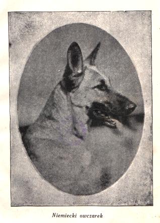 PIES DOMOWY opiea, wychowanie, tresura - E.v.Otto 1929