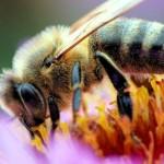 Pszczółka Maja sobie lata…