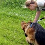 Nie samą obroną pies żyje