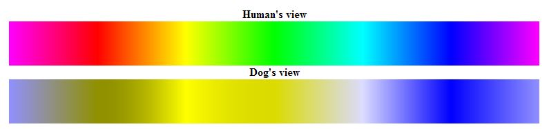 dog blog 3