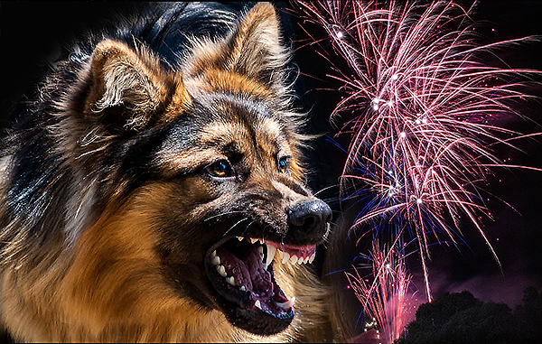dogs-fireworks2