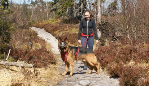 Z psem na Szczelińcu - Góry Stołowe
