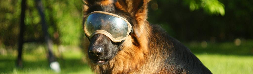 Okulary dla psa