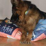 Karma sucha Ontario Adult Large 7 Fish & Rice [Top For Dog]