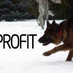 Modne i wytrzymałe obroże od Dog's Profit [test]
