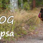 Plecak dla psa od HikingDog