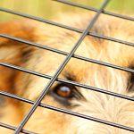 Klatka dla psa – azyl czy więzienie?