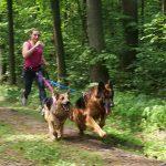 Jak zacząć biegać z psem – canicross dla każdego.