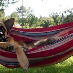 Tak, Ty też możesz pojechać na wakacje bez psa!