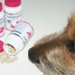 Testy Gammolen Active  [Top For Dog]