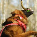 """Wstydliwy problem posiadania """"nieusłuchanego"""" psa"""