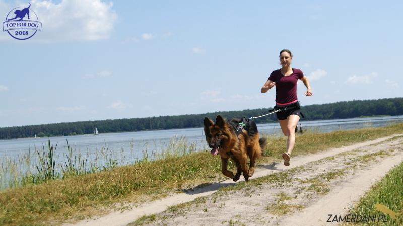 Młoda dziewczyna biegnie z psem trenując canicross