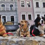 Pies w Lublinie – sesja foto