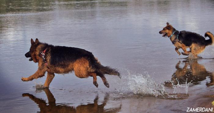 Jesienne kursy i warsztaty dla psiarzy – nie może Cię zabraknąć!