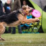 Dog Games Fall – nasze pierwsze zawody we frisbee