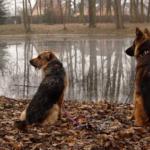 Weekend z psami, czyli jak porządnie zmęczyć się na urlopie